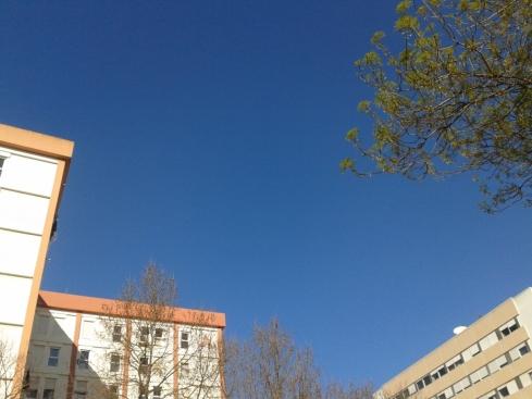 manha ao sol