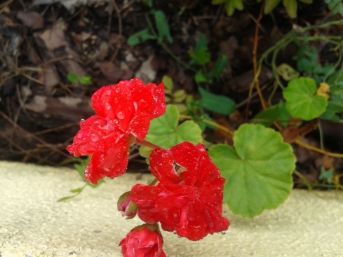 flor com gota de orvalho