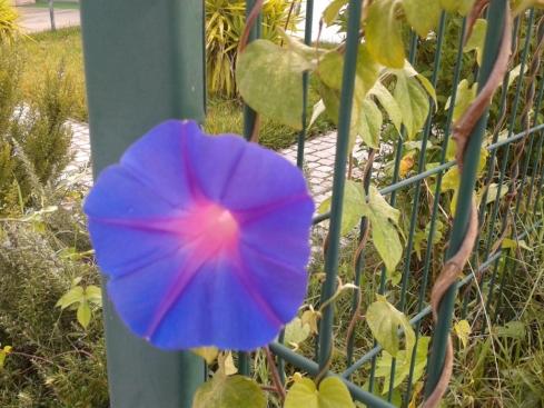 jardim e as flores