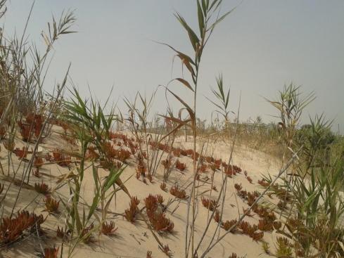 As dunas