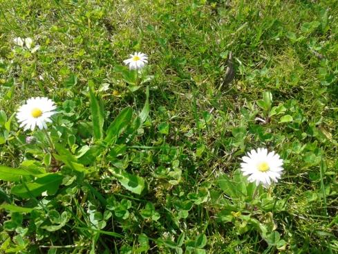 março a florir