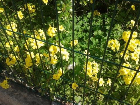 Onde as flores crescem